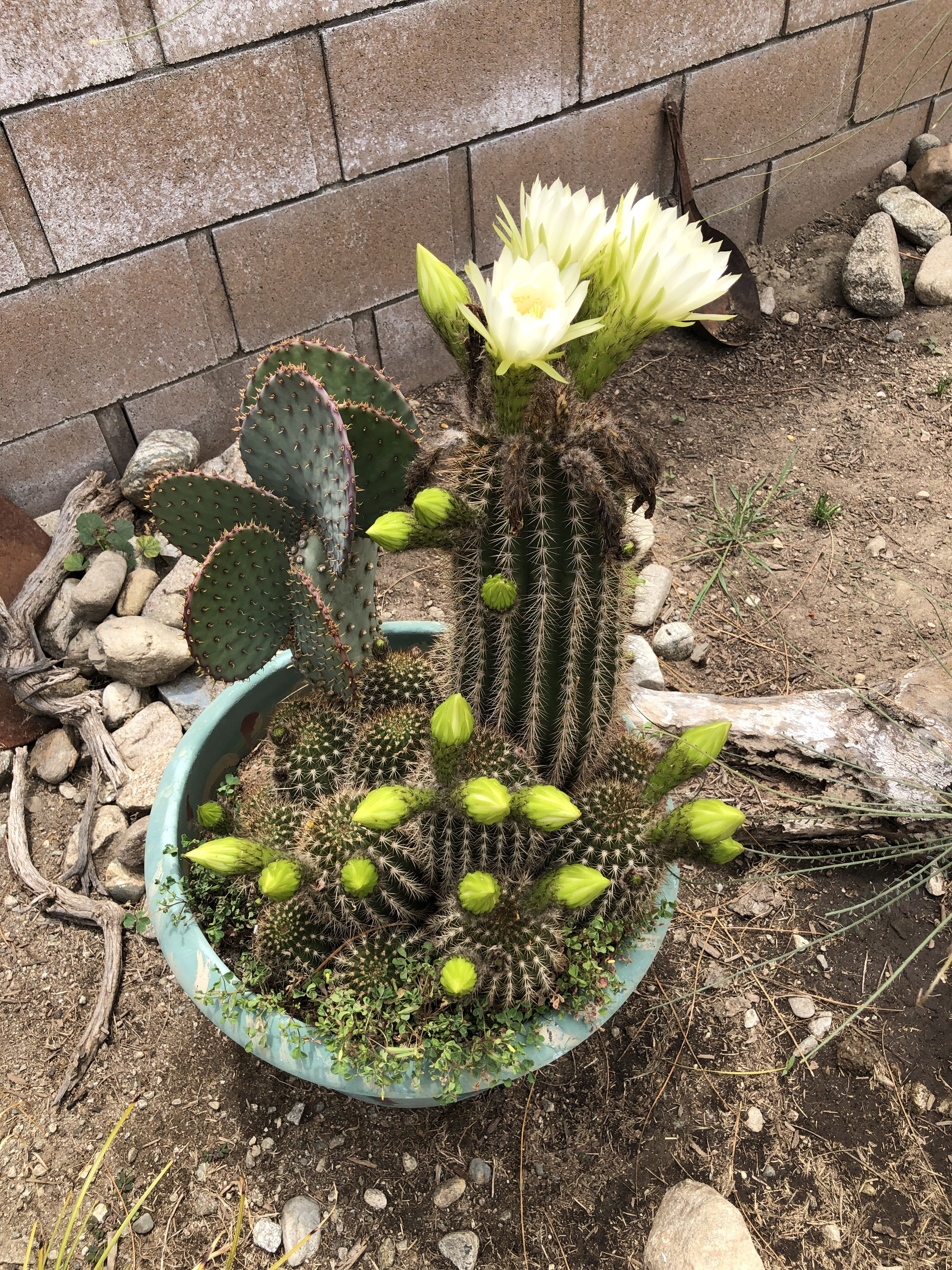 beautiful image by Shari Rea Planting succulents, Plants