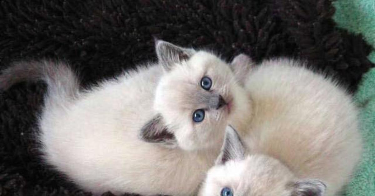 Ces 49 photos de chats sont juste incroyables !