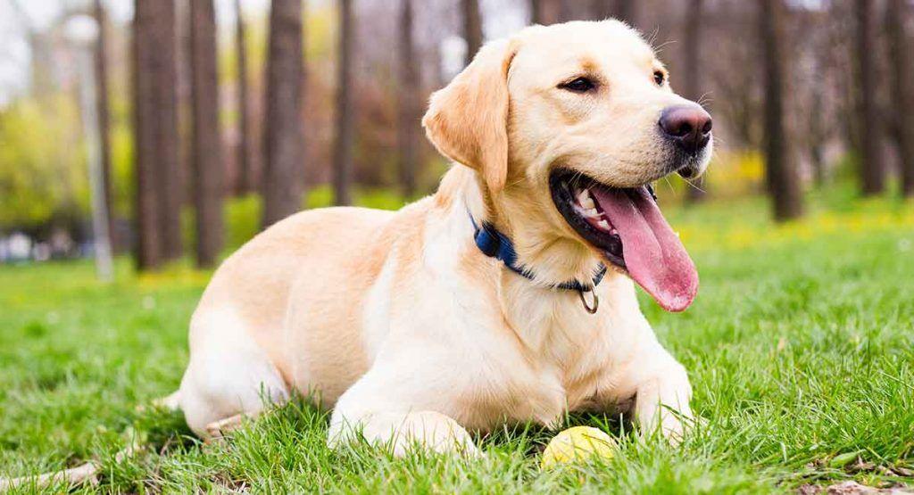 Top 10 Smartest Dog Breeds Pet Lovers Smartest dog