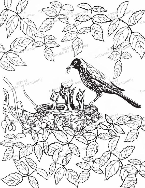 Mother Bird Feeding Babies Adult Art Adults Coloring Page PDF