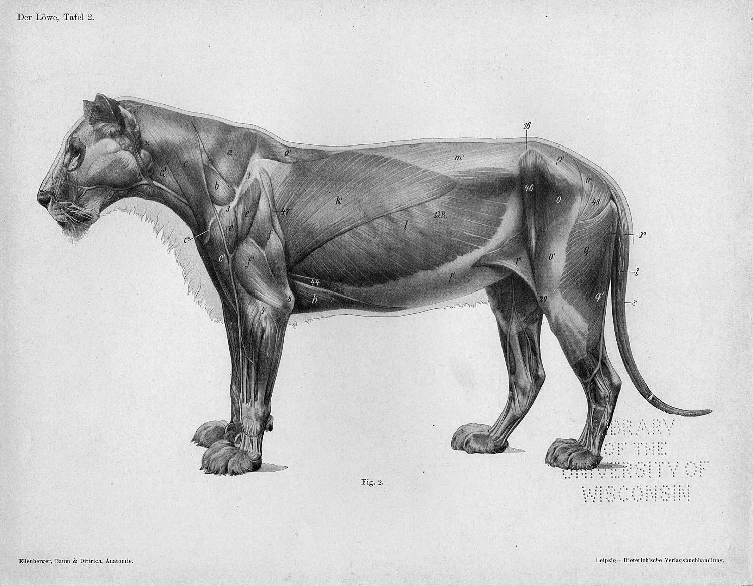 Pin by Sina Bischof on Tier scits | Pinterest | Animal anatomy ...