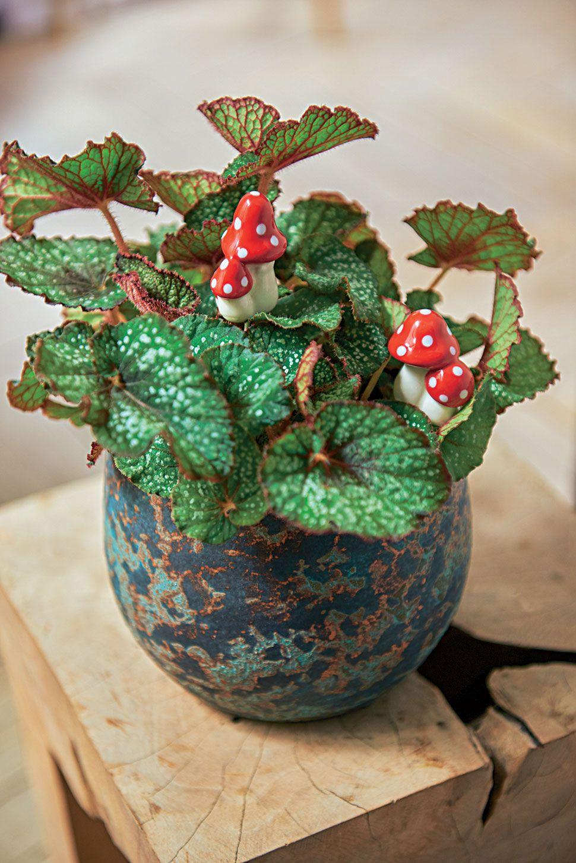 A placer dans votre plante en pot ou dans votre jardin
