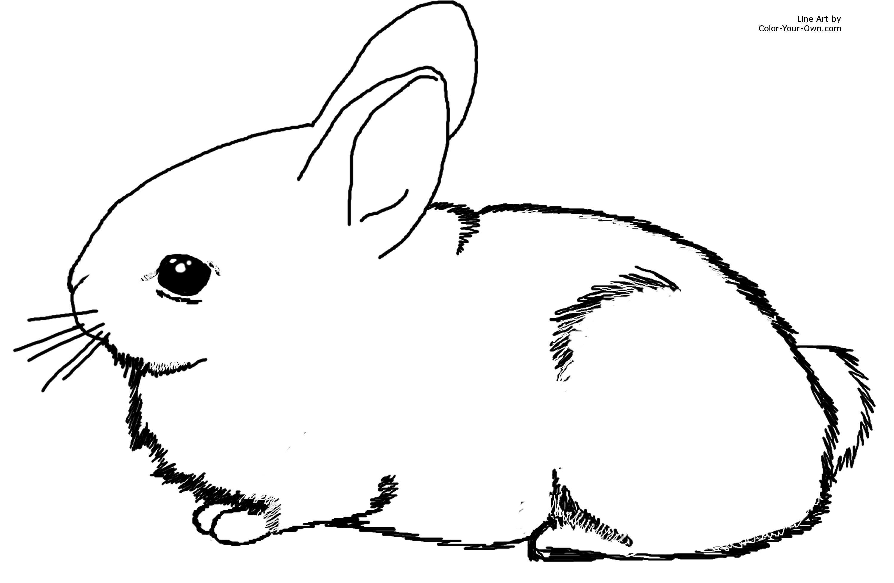 bunny rabbit coloring pages # 0