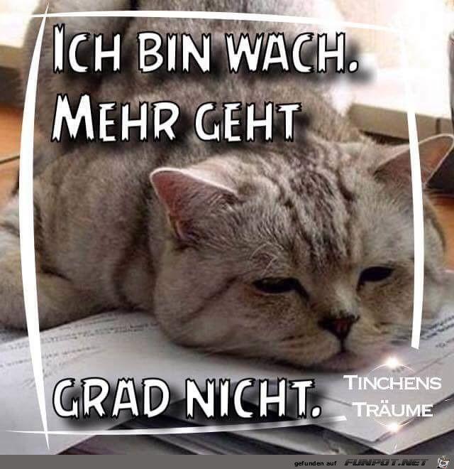Pin Von Inge Nordlohne Auf Bin Wach Good Morning Humor Und Cats