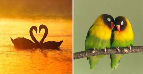 El amor se refleja en la naturaleza  y todo lo creado por Dios, solo ve con los ojos del amor y lo encontraras en todas partes #Amor