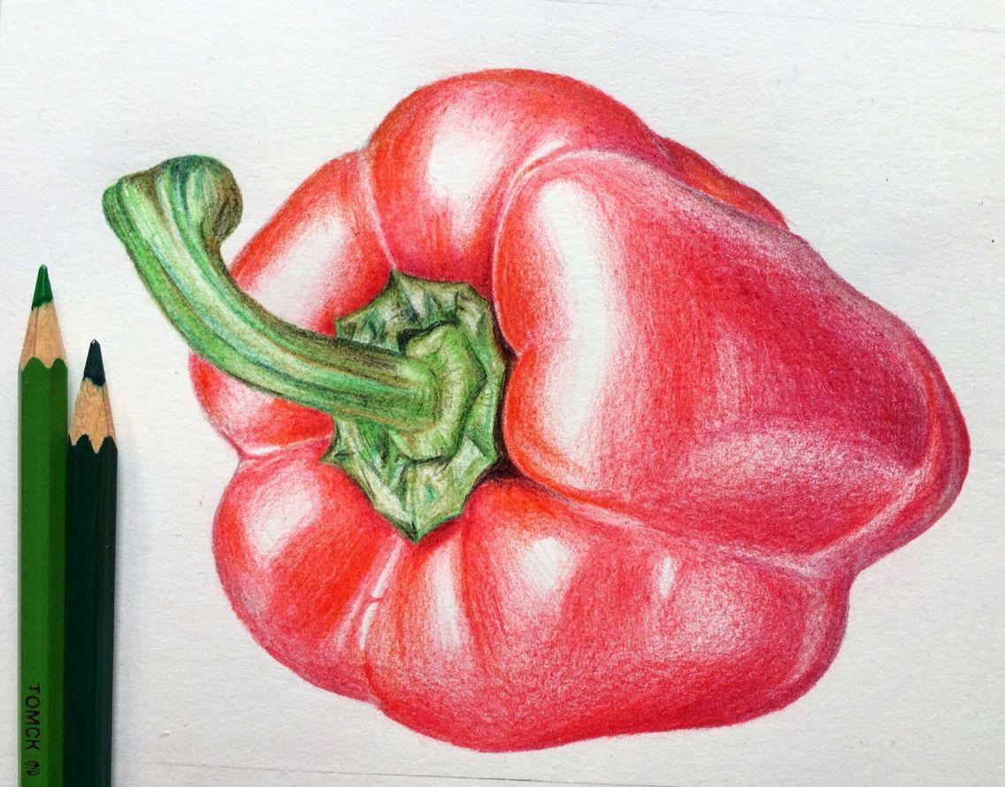 Paprika, illustration, vegetables, drawing, рисунок ...  Paprika, illust...