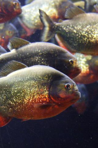 Idesign Iphone Just Another Wordpress Site Aquarium Fish Tank Animals Tropical Fish
