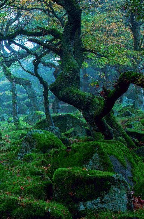Sherwood Forest, Nottingham, England - Imgur