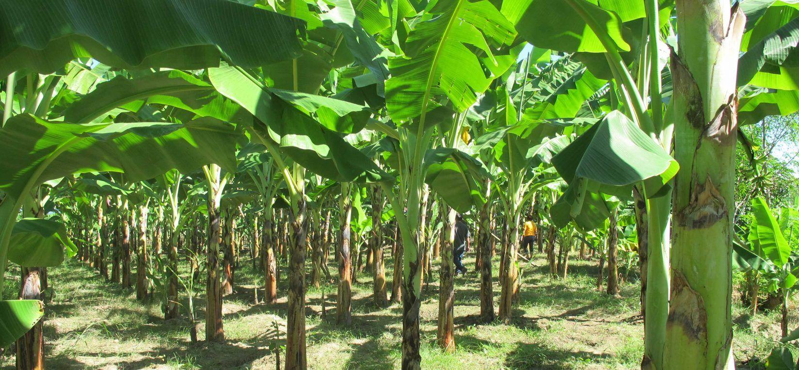 Pin On Exotic Home Backyard farming in nigeria