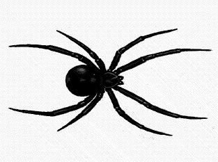 Cartoon Pictures Of Spiders | Free Download Clip Art | Free ...