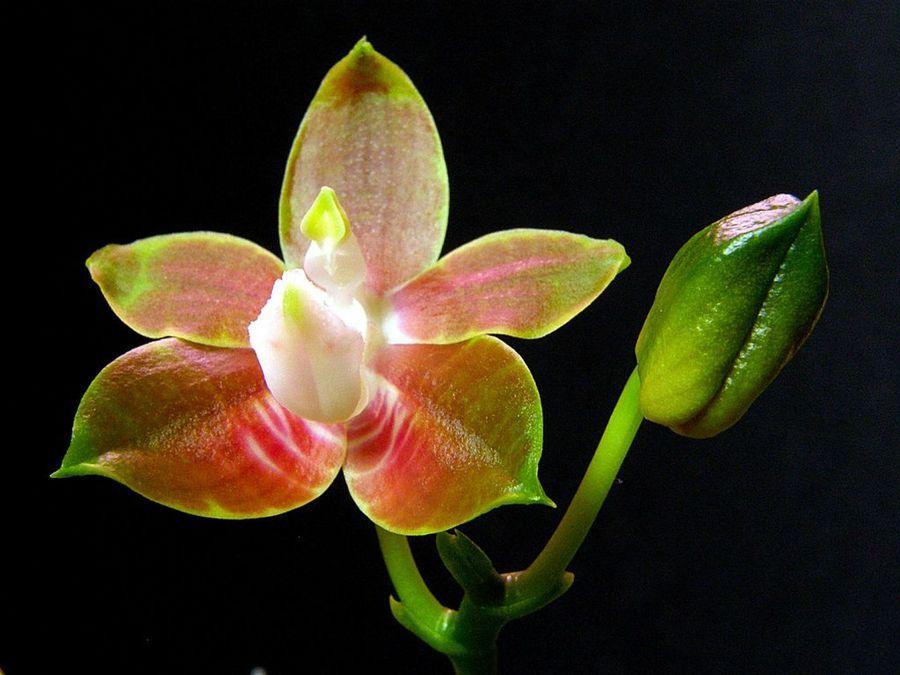 Nombres Y Caracteristicas De Los 5 Tipos De Orquideas Mas Bellas