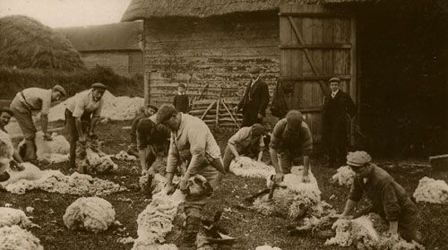 Sheep shearing-Woolen Industry in England   iets maken ...