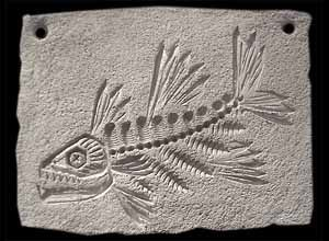Fish Fossil Relief from forks   Art in School in 2019   Fish