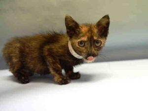 Ciosa A1084065 Dog Adoption Saving Cat Cat Adoption