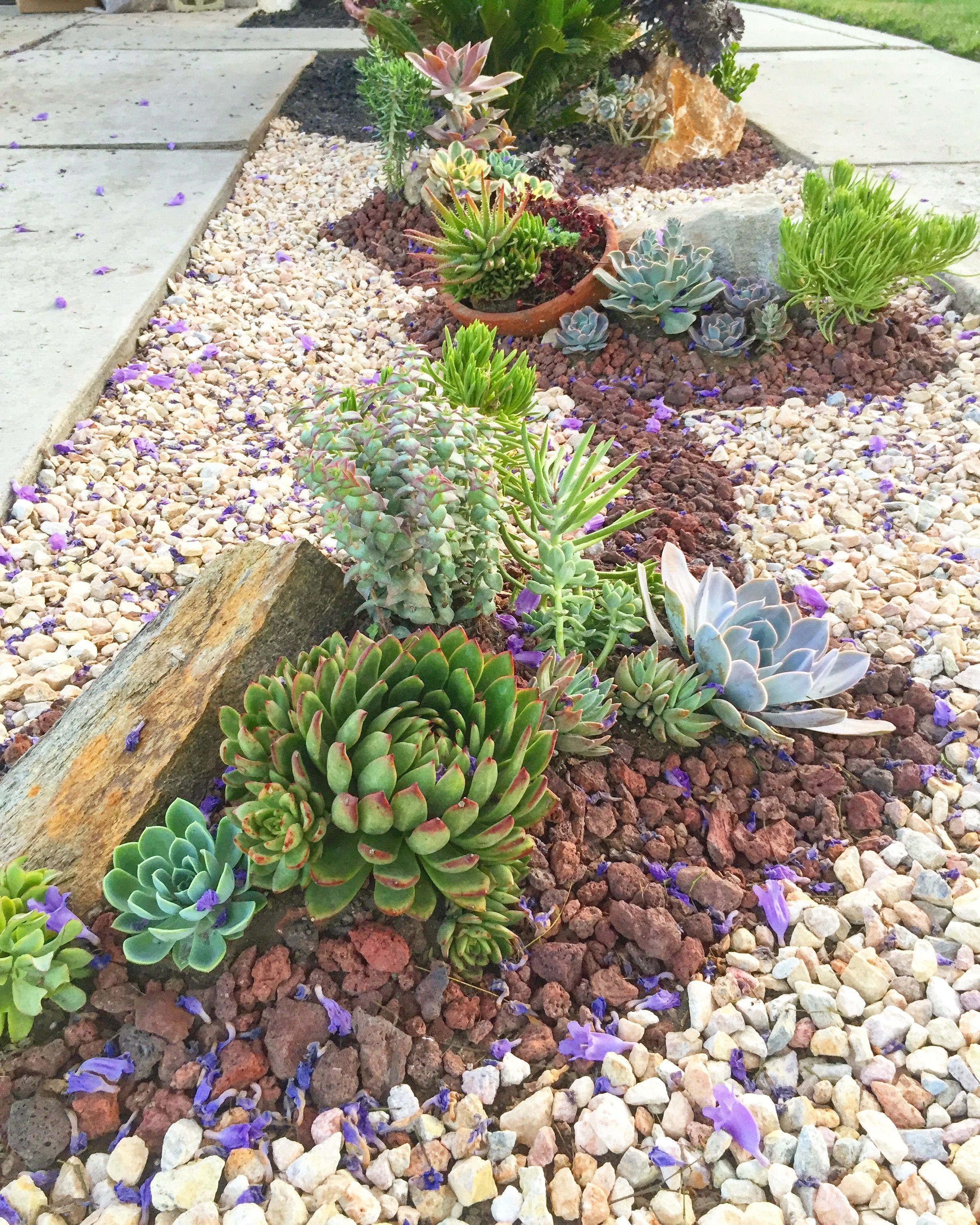 A Pretty Flowing Border Of Succulents And Rocks