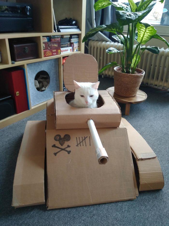 Quarantined-Owners-Build-Cardboard-Cat-Tanks