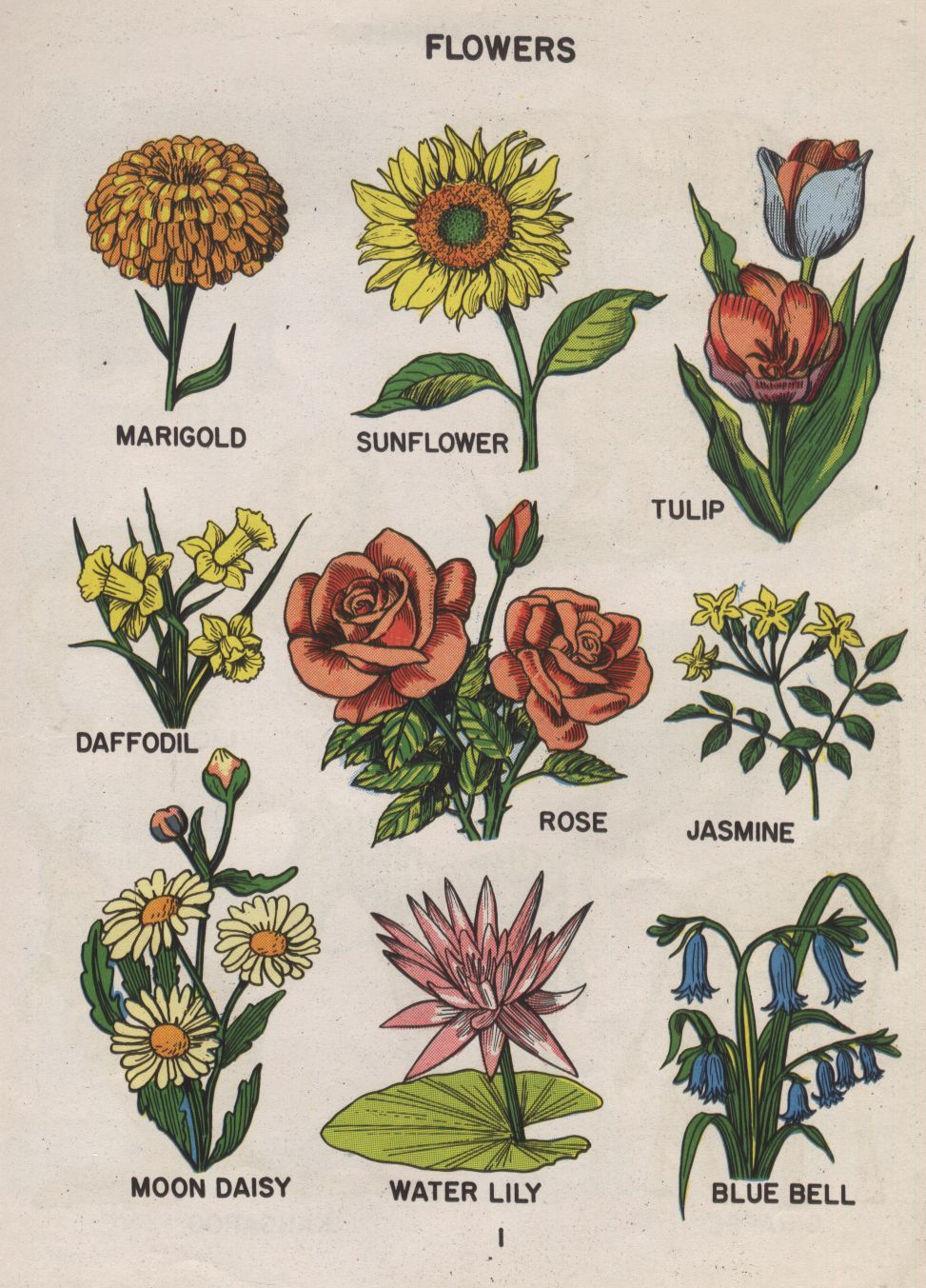 Fuckyeahvintageretro photo draw pinterest wildflowers