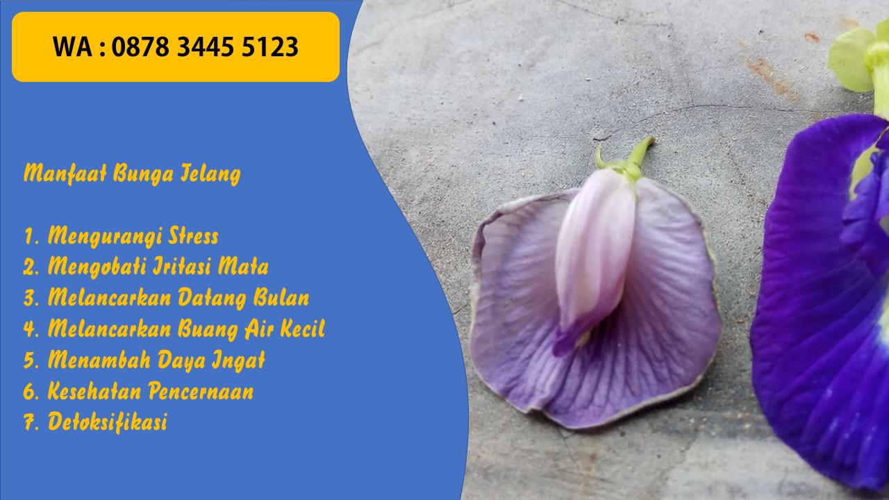 Pin Di 0878 3445 5123 Bunga Telang Di Bandung