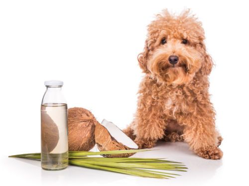 Why Every Dog Owner Should Have Coconut Oil In Their Pantry Coconut Oil For Dogs Oils For Dogs Human Food For Dogs