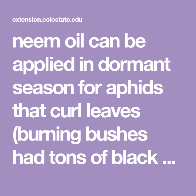 neem oil can be applied in dormant season for aphids that
