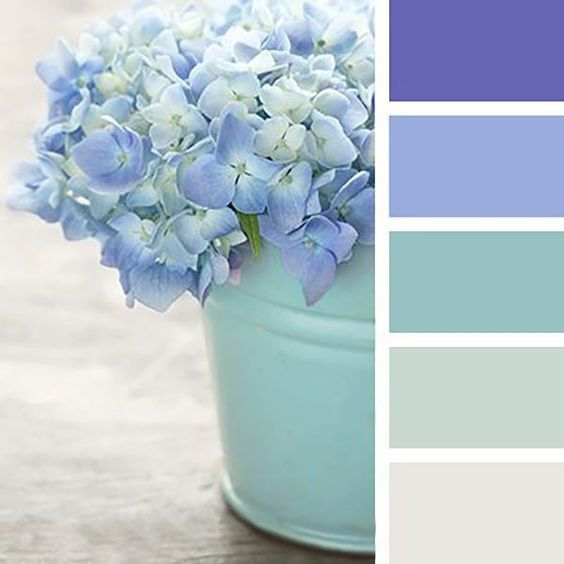 Mint Wandfarbe: Blue Pastel Color Hydrangea Flowers On Wooden Table (With