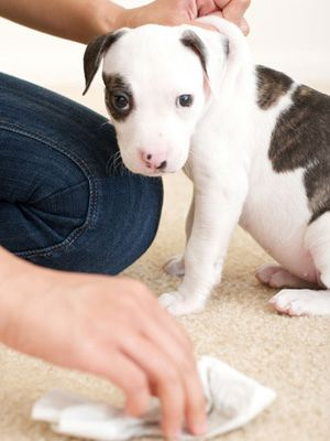 Can You Use Peroxide On Carpet To Eliminate Pet Odor