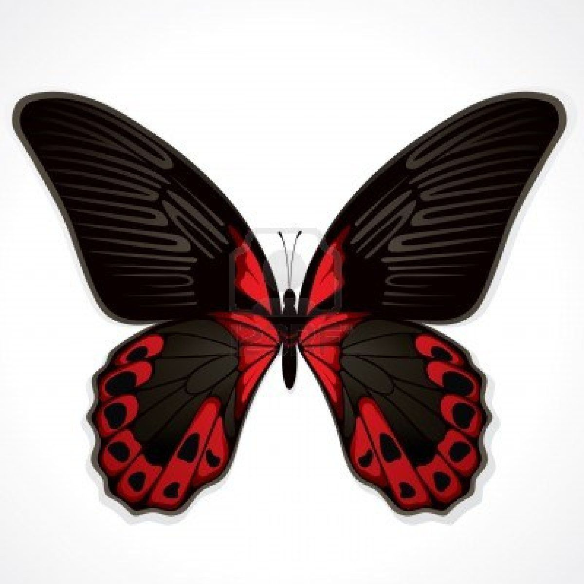 The Red Butterfly Black Butterfly Tattoo Butterfly Art Print Red Butterfly