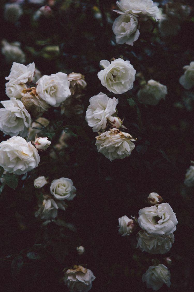 Helena La Petite Dark Flowers Flower Aesthetic Flowers Photography