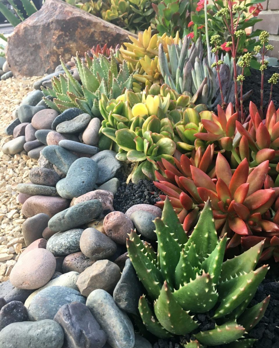 45 Brilliant Succulent Garden Ideas For Backyard Succulent