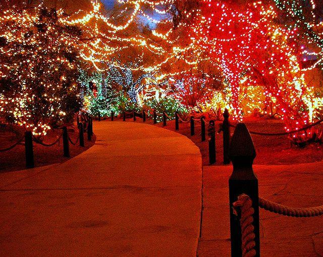 Christmas at the Cactus Gardens Outdoor christmas lights