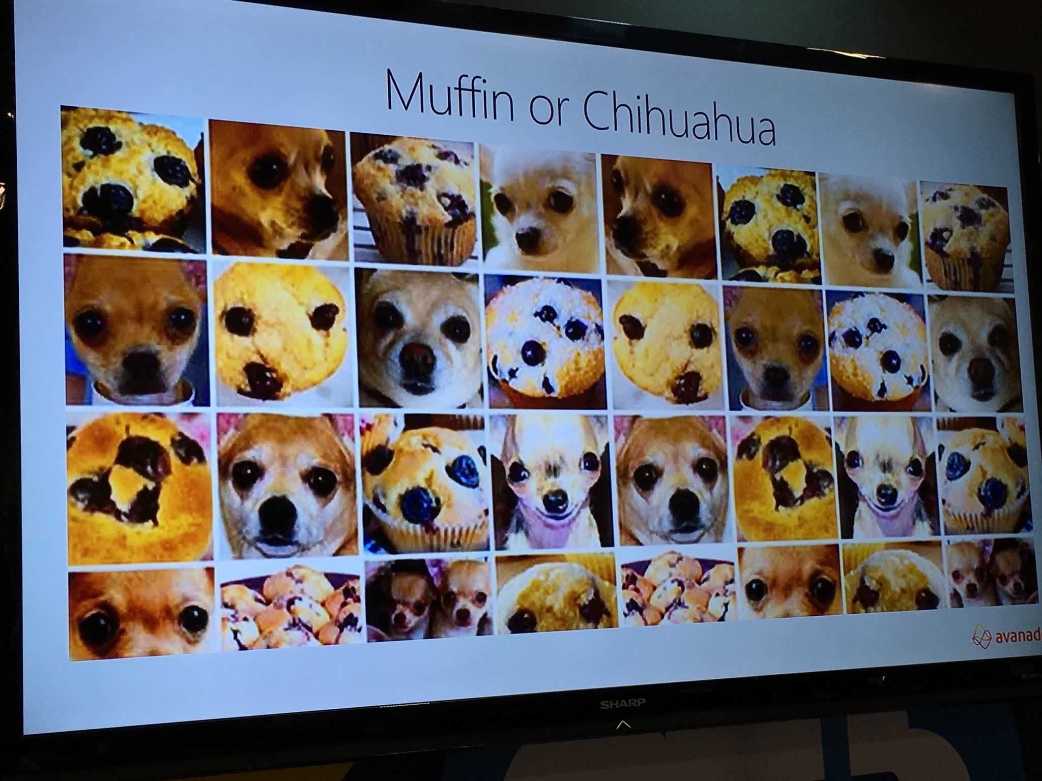 Muffin or Chihuahua? http//ift.tt/2j53em0 Chihuahua