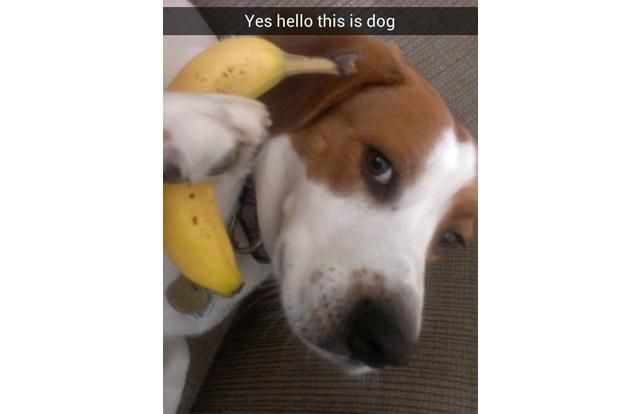 33 Hilarious Snapchats That Prove We Really Don't Deserve Dogs (Slide #36) - Pawsome