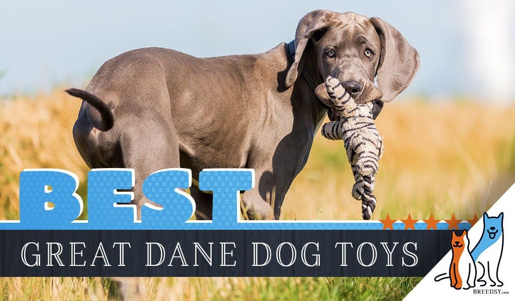 12 best dog toys for great danes in 2020 in 2020 best