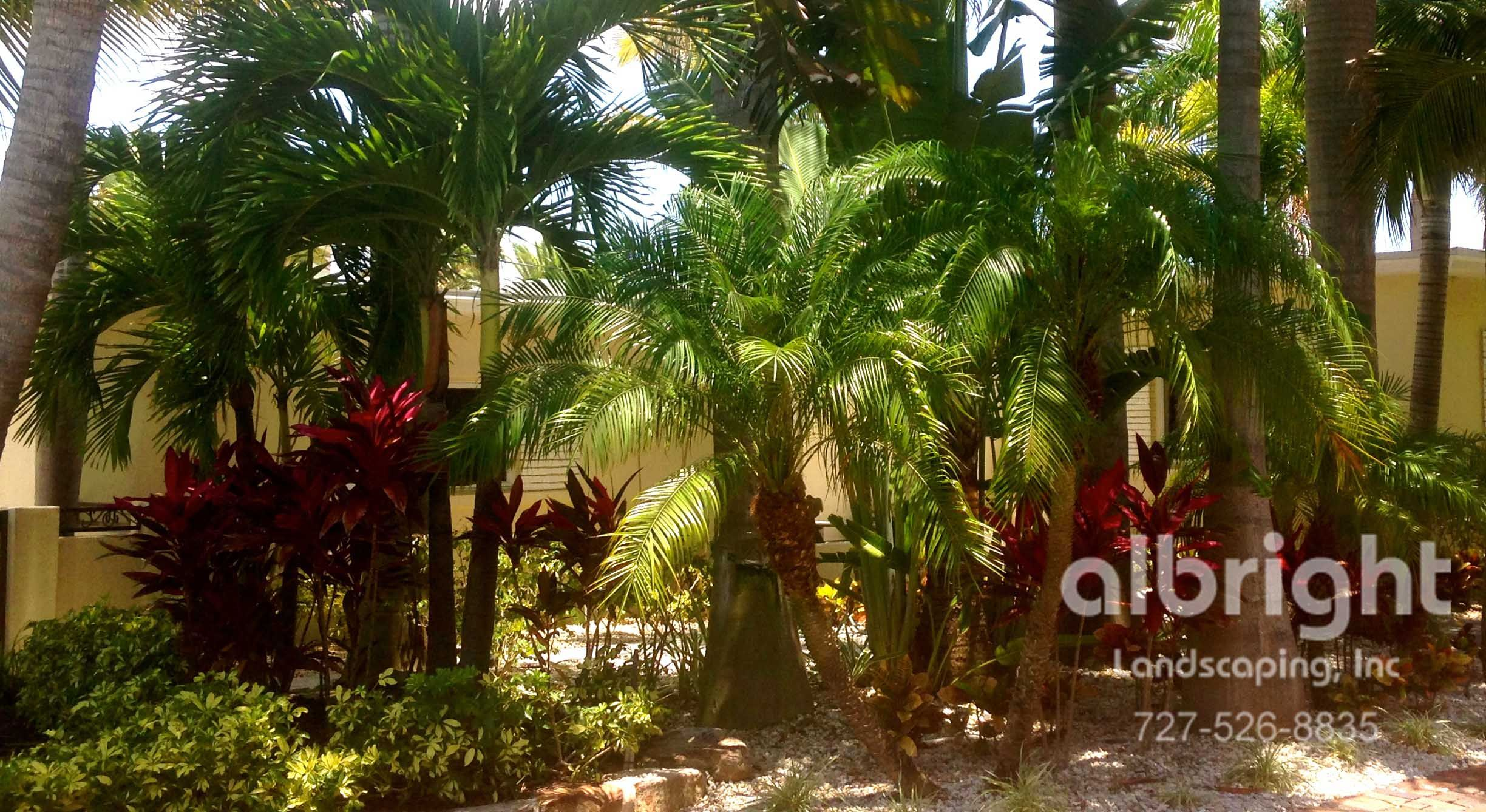 A tropical transformation: 3 varieties of Palm Trees for layered ...