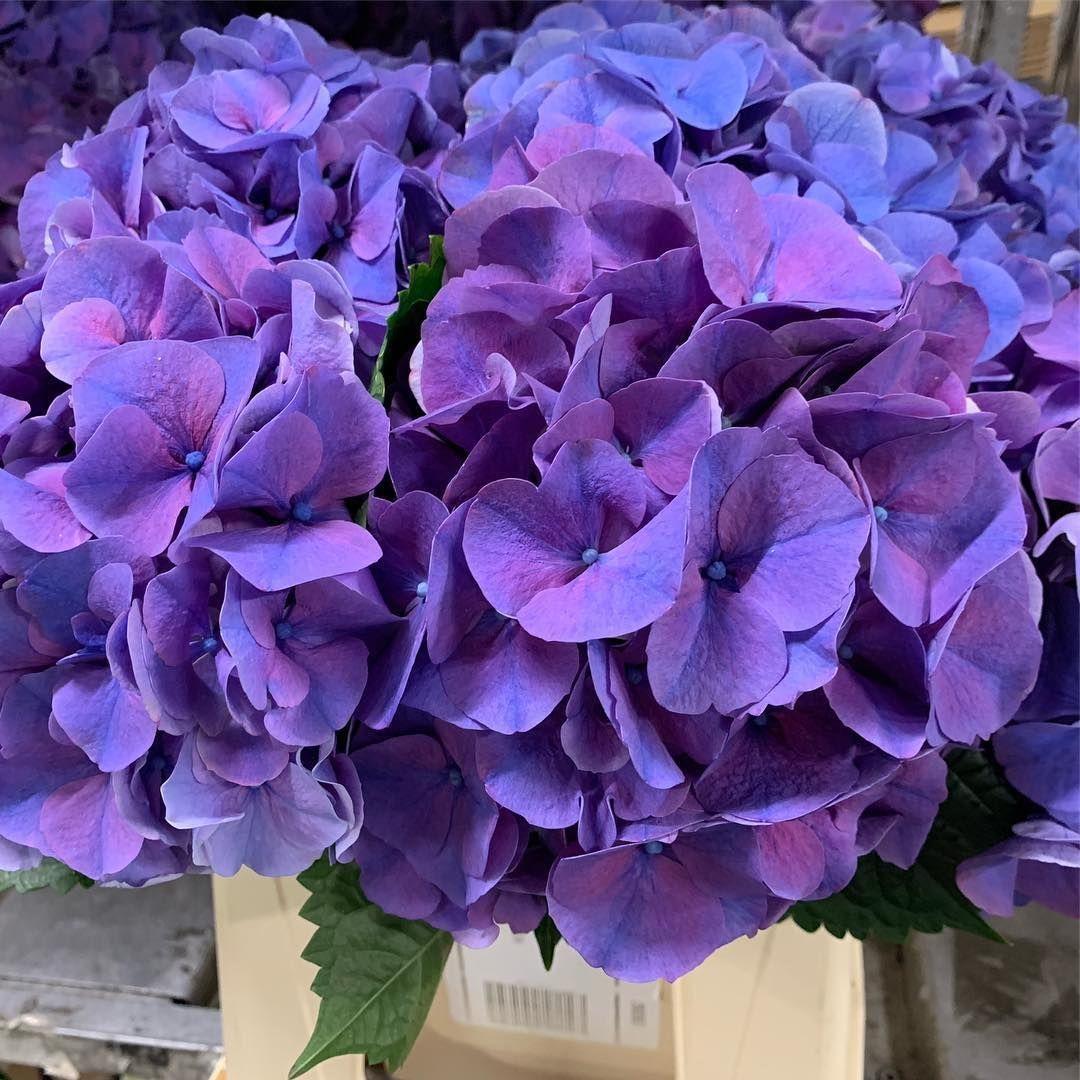 Hydrangea Season Is Starting Of Nicely Flowers Florist Weddingflowers Flower Floristry Hydrangea With Images Hydrangea Season Wedding Flowers Floristry