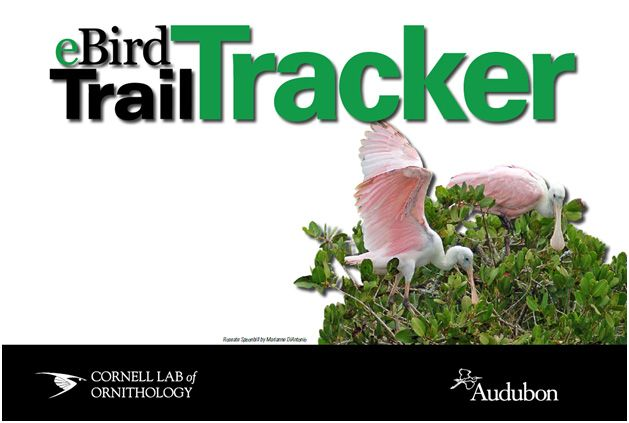 Electronic Bird Tracker for all my birding friends | Ding Darling Nature National Wildlife Reserve | Sanibel Island, Florida