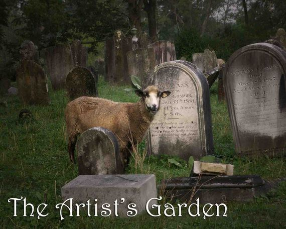 Sheep in Graveyard Photograph, Gothic Decor by TheArtistsGarden, $20.00