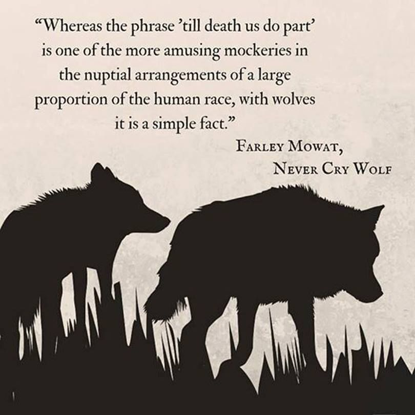 Farley Mowat Quote Never Cry Wolf marriage Wolf