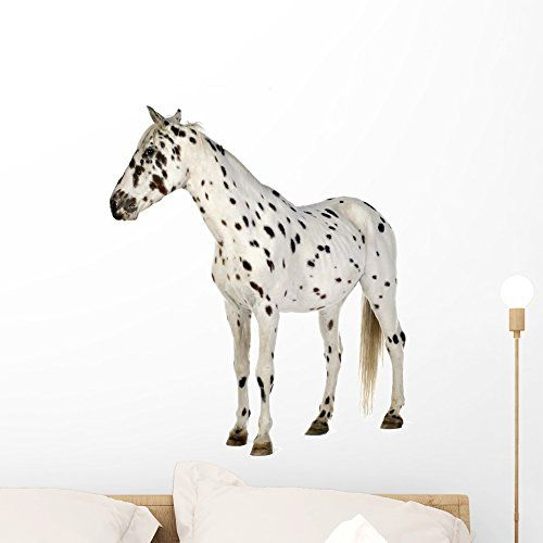 Appaloosa Horse Wall Decal