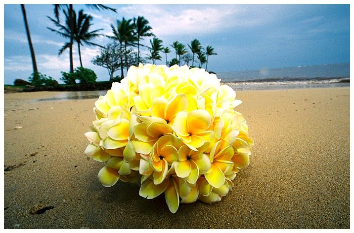 Oh Wow, yellow plumerias on the beach... | My Future Tropical ...