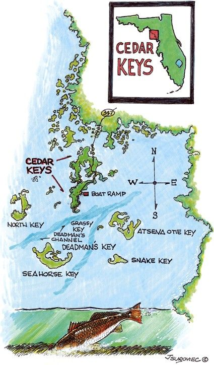 Cedar Key Florida Map.Cedar Key Florida Redfish Fishing Cedar Key Florida Fishing