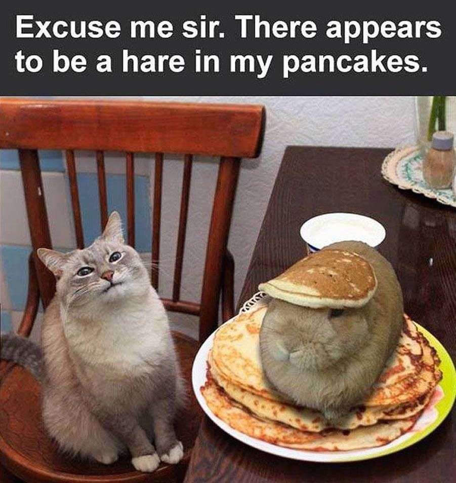 Excuse me sir. There appears to be a hare in my pancakes