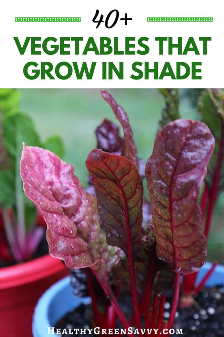 40 Vegetables That Grow In Shade Organic Gardening Tips 400 x 300