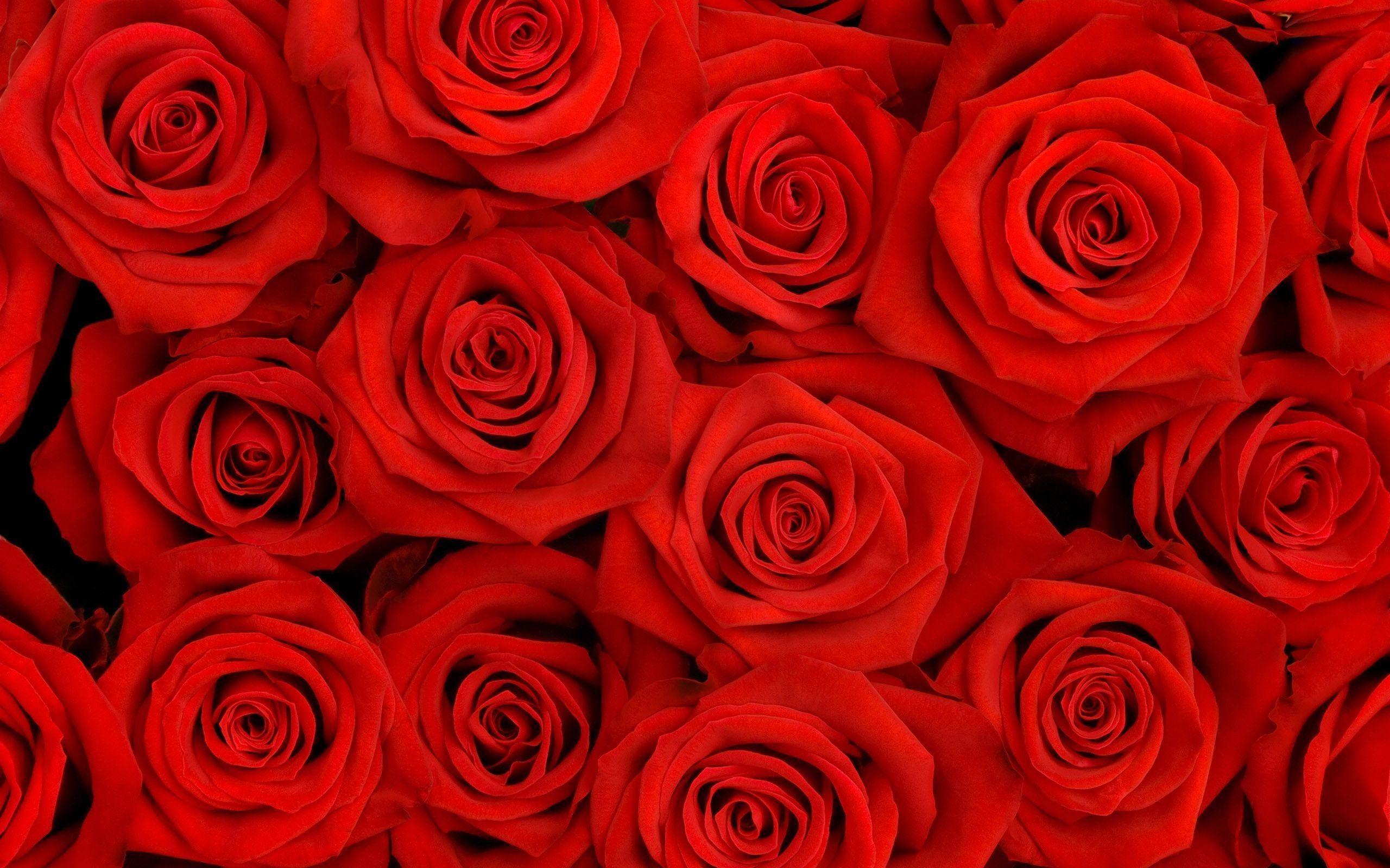 Res 2560x1600 Red Roses Wallpapers For Desktop Wallpaper Red Roses Wallpaper Red Roses Background Rose Flower Wallpaper