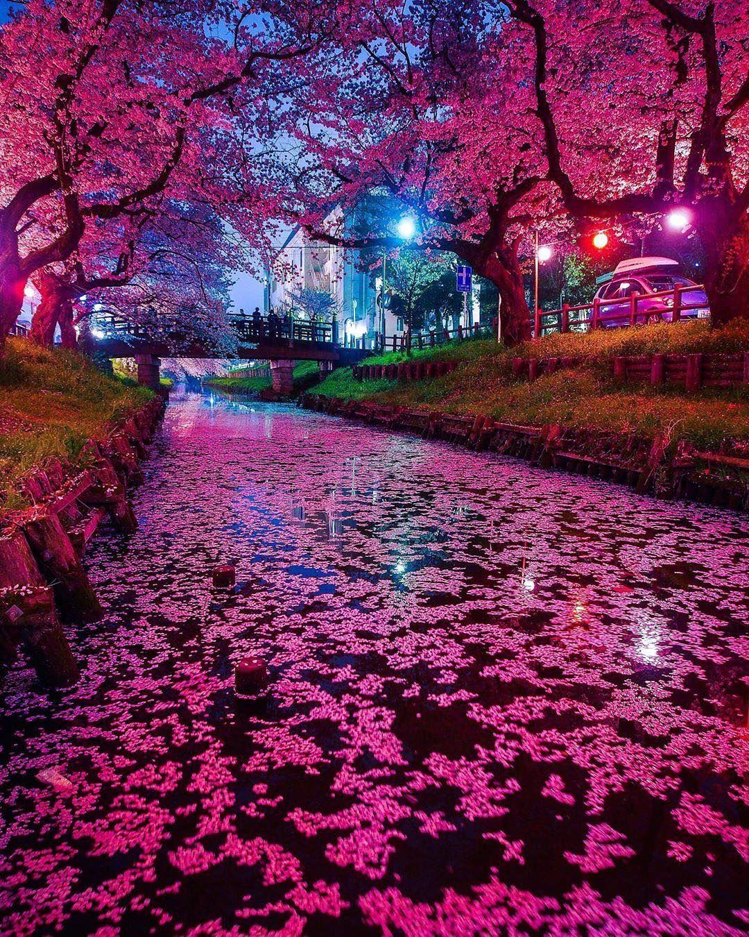 Jika Anda Berada Di Ikebukuro Saat Musim Bunga Sakura Pastikan Untuk Mengunjungi Sungai Shingashi Dan Kuil Ka Bunga Sakura Fotografi Alam Pemandangan Khayalan