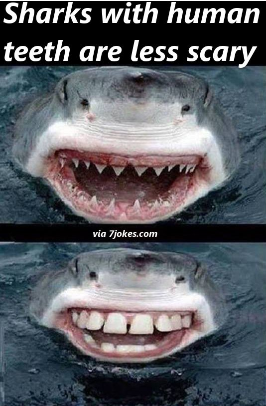 Image of: Carnivore Sharks Arent Scary With Human Teeth Pinterest Sharks Arent Scary With Human Teeth 7jokes Funny Animals