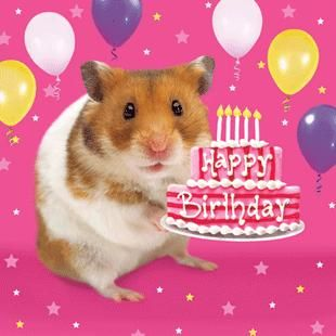 Hamster Cake Birthday Card 2 60 A Great Range Of Hamster Cake Birthday Card From Fresh Card Free Happy Birthday Cards Happy Birthday Cards Birthday Humor