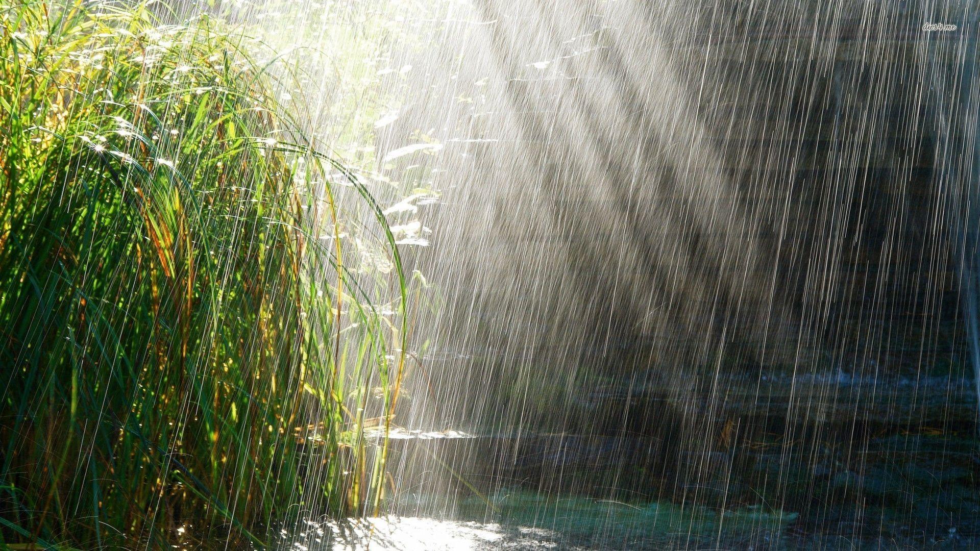 Raining At The Pond Wallpapers Hd Free 441523 Rainy Day Wallpaper Rain Wallpapers New Nature Wallpaper