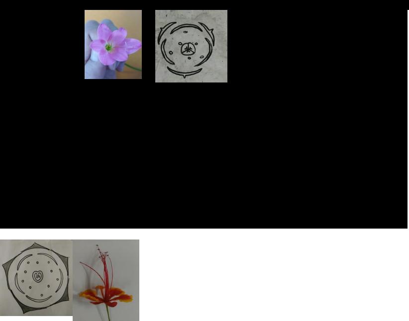 Gambar Bunga Bougenville Serta Bagiannya Embed Laporan 7 Btt Diagram Dan Rumus Bunga Revisi Gambar Bunga Bugenvil Dan Bagian Bagi Di 2020 Bunga Bunga Kertas Gambar