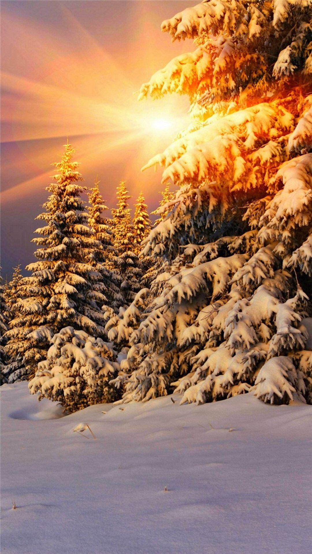 Snowy Pine Trees Sunshine Iphone 6 Wallpaper Download Iphone Wallpapers Ipad Wallpapers One Stop Download Winter Scenery Winter Landscape Winter Pictures Sunset forest snow winter spruce trees